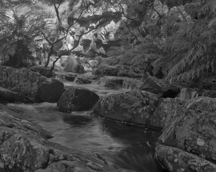 Ferns and brook