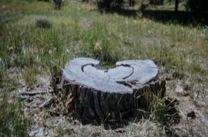 heart stump