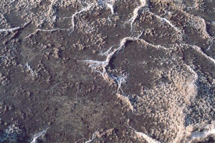 Salt on the pans - Velvia 50, G. Zuiko 50mm f/1.4