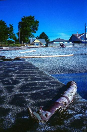 Storm drain with alder