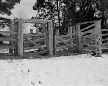 Kangaroo tracks at the cattle press