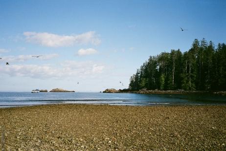 Windy Bay tidal flats