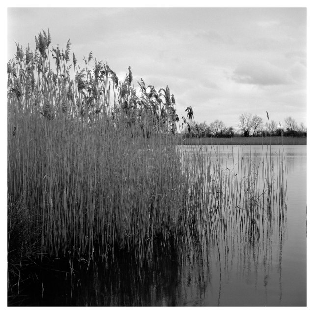 Cossington Meadows (2 of 7)