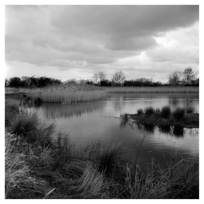 Cossington Meadows (3 of 7)