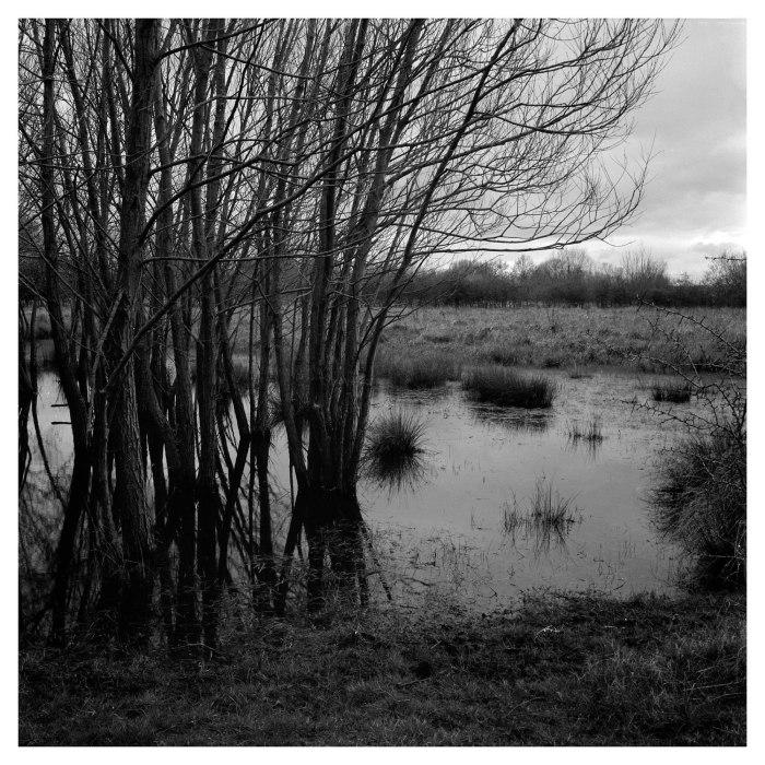 Cossington Meadows (7 of 7)