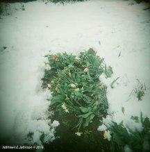 SpringSnow3