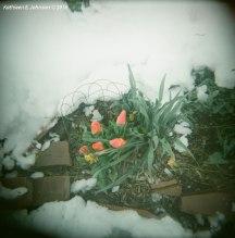 SpringSnow4