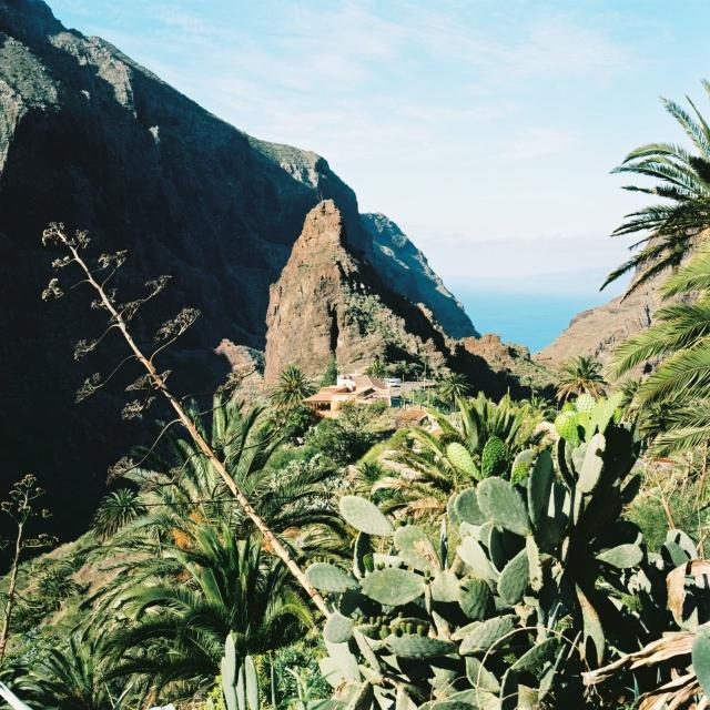 Tenerife Yashica-12