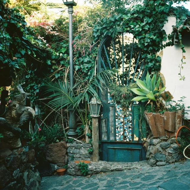 Tenerife Yashica-8