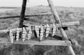 Drying fish to make hardfiskur, a local delicacy