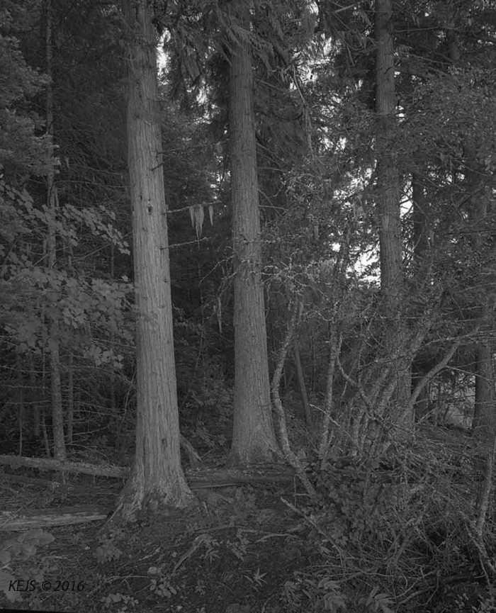 VanLakeTrees1
