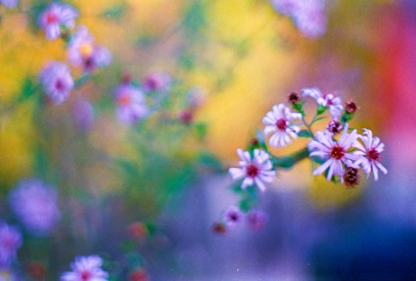 flowers-and-bokeh