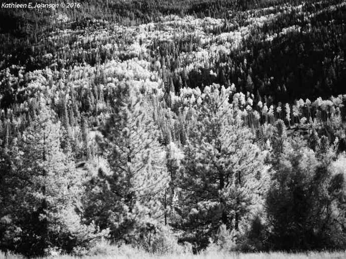 northparkevergreens