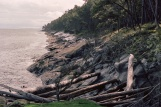 Mayne Island shore with driftwood