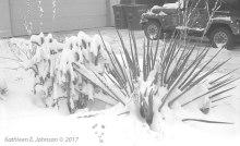 winter_cactus