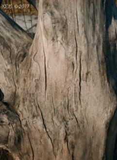 bouldertree