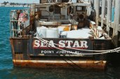 Sea Star (1 of 1)