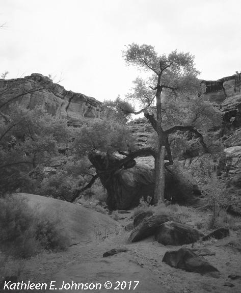 Hunter_Tree#2_Crop