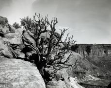 canyonlands002A