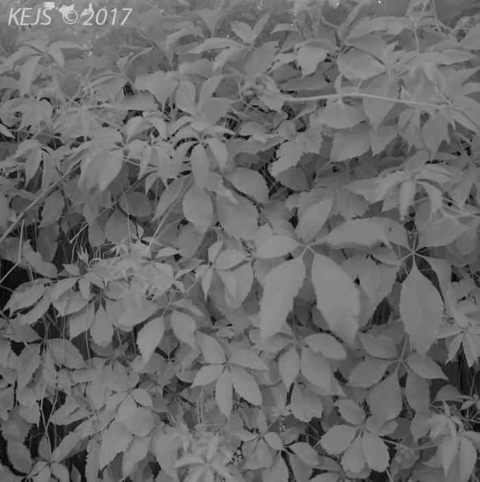 M6X6_Rollei_IR004