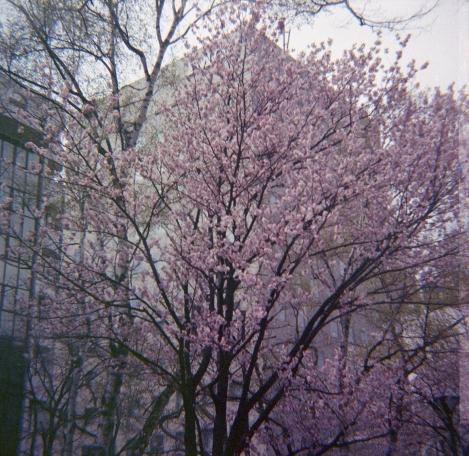 Sapporo018