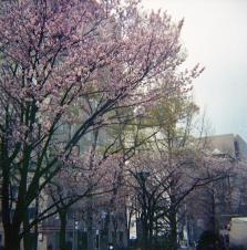 Sapporo019